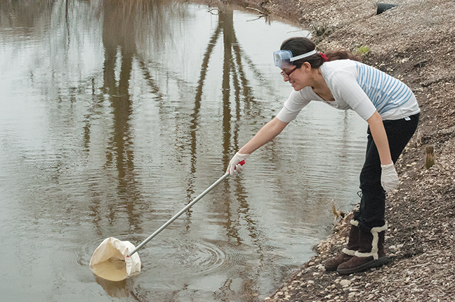 Jennie+Rojas%2C+School+of+Pre-College+Education+student%2C+skims+the+pond+in+search+of+organisms+at+the+Mequon+campus.
